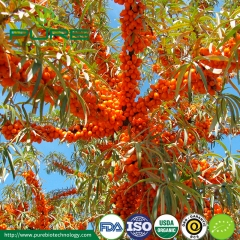 Organic Sea Buckthorn Powder